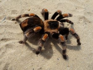 PF acha 84 aranhas enviadas pelos correios da Alemanha para BH